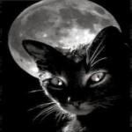 gatto luna notte occhi