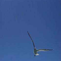 gabbiano-volo-sudafrica-700-x-525