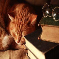Les chats dans la poésie de la vie – Poésie