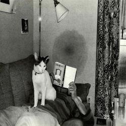 gatto libro scrittore amore passione sesso