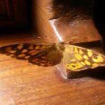 farfalla poesia legno vita morte