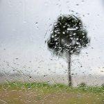 arbresouslapluie