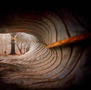 Foglia-autunno-bosco-foresta-alberi-natura-marrone-300x295