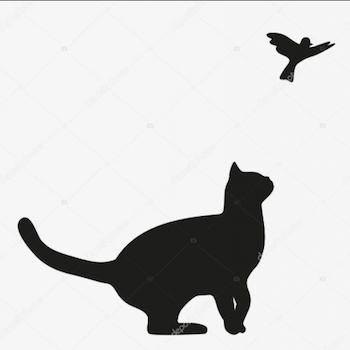 gatto uccellino