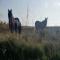 I cavalli di Mailhac