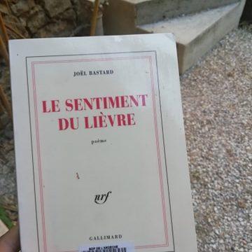 Extraits de LE SENTIMENT DU LIÈVRE – Joël Bastard (TRAD. FR-ITA)