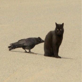 La storia del gatto nero e del corvo di plastica